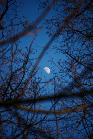 Rising moon in the sky among the trees.