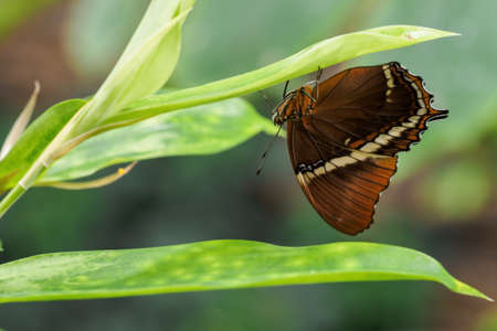 Tropical exotic colored butterfly sitting. Stock fotó