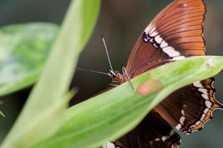 Tropical exotic colored butterfly sitting.