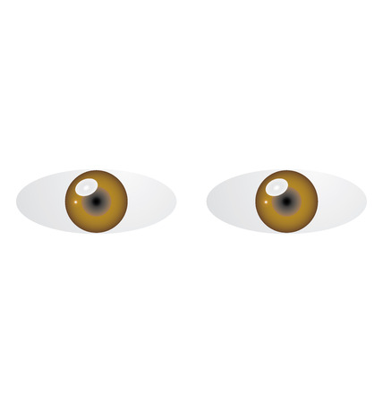 Illustration of two brown eyes on white background Vector