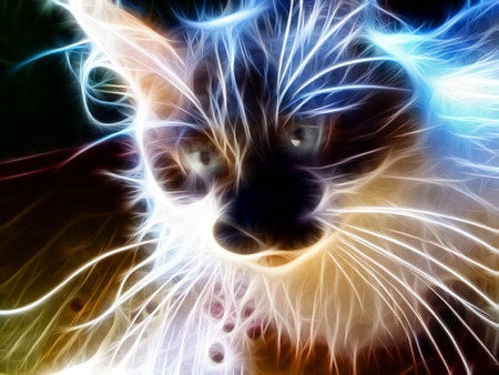 A beautiful illustration of abstract neon cat illustration