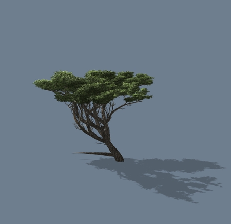 homogeneous: 3D rendered illustration of a tree. Isolated on a homogeneous background Stock Photo