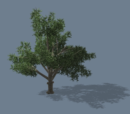 subtropical: 3D rendered illustration of a tree. Isolated on a homogeneous background Stock Photo