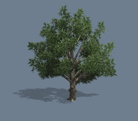 3D rendered illustration of a tree. Isolated on a homogeneous background Stock Photo
