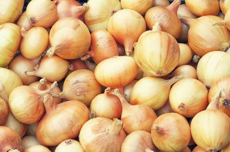 grower: Uniform texture yellow bulb onion Stock Photo