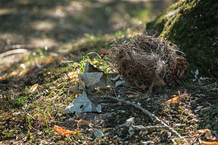 ramification: Birds nest in the tree roots