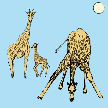 Sketch of cute giraffes