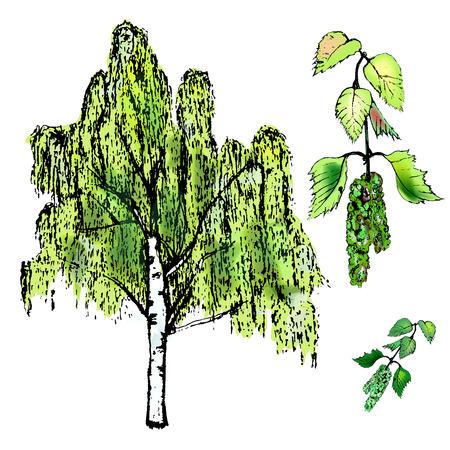 Bladeren van berk, bladeren en boom, katjes van berk. Vectorillustratie Stock Illustratie