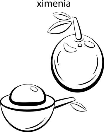 Black and white images of fruits for coloring.