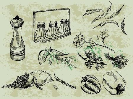 salt pepper: seasonings and spices Illustration