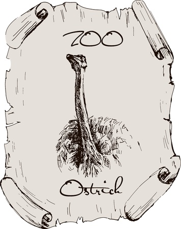 ostrich  vintage image on a sheet of papyrus ostrich