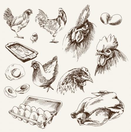 cockerel: pollo di allevamento raccolta di disegni su uno sfondo bianco