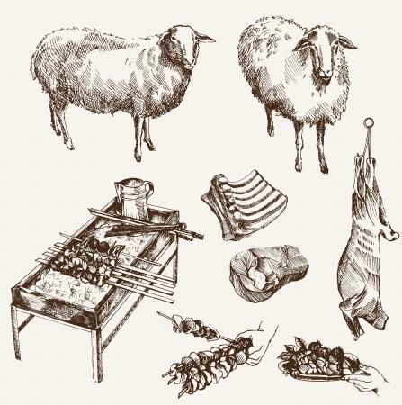 lamb: allevamento di pecore insieme schizzi su uno sfondo bianco Vettoriali