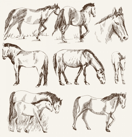 bridle: silhouettes of horses