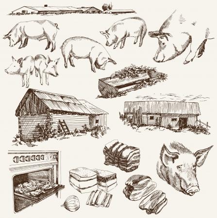 carniceria: cría de cerdos Vectores