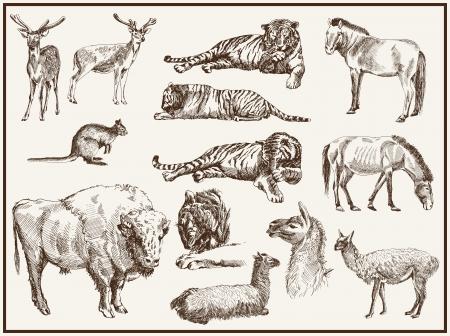 animaux zoo: animaux du zoo