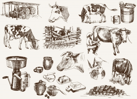 cow and milk products Vector