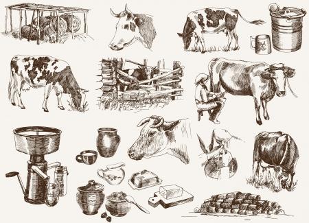 milchkuh: Kuh und Milchprodukte