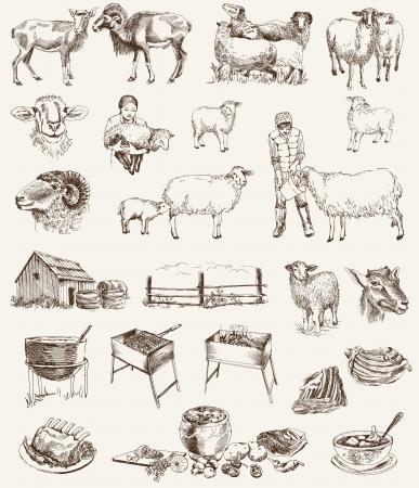 oveja: ovejas conjunto de cr�a de bocetos vector en un fondo blanco Vectores