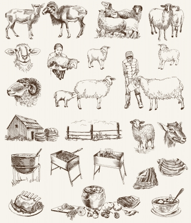 roast lamb: sheep breeding  set of vector sketches on a white background Illustration