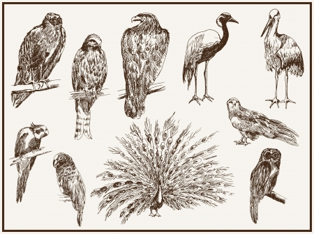 birds from the zoo Vector