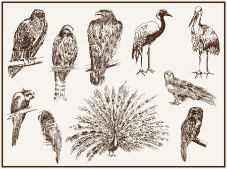 piume: uccelli dallo zoo