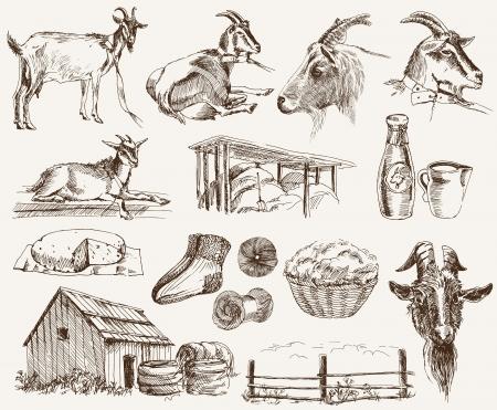breeding goats Stock Vector - 16780883