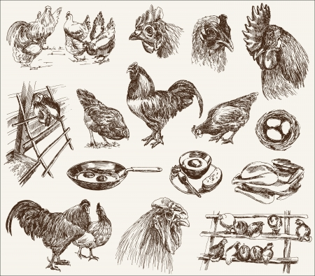 흰색 배경에 디자인의 닭 사육 컬렉션