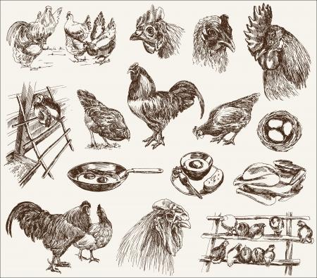 kip fokken collectie ontwerpen op een witte achtergrond Stock Illustratie