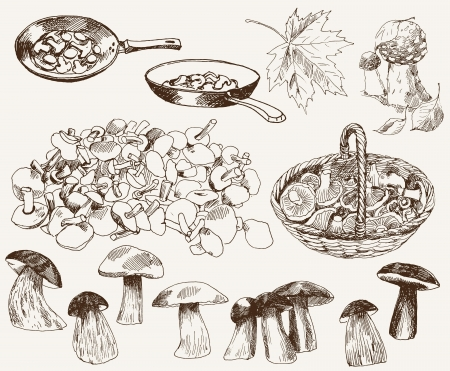 poisonous organism: gifts of nature  mushrooms Illustration