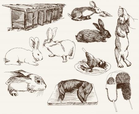 breeding rabbits Stock Vector - 16987334