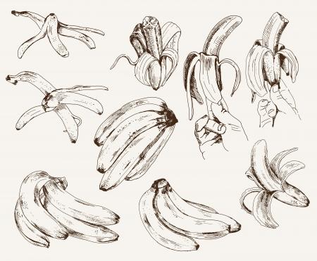 banana peel: bananas  set of vector sketches Illustration