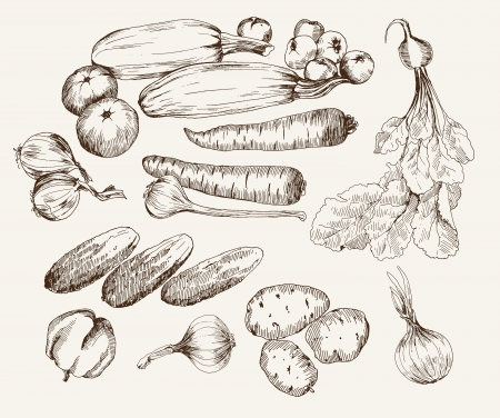 vegetables  ingredients for cooking Vector