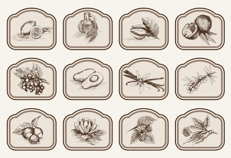 vector sketches natural ingredients used in pharmacology Illustration