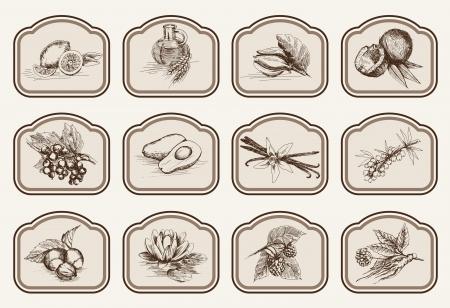 vector sketches natural ingredients used in pharmacology 矢量图像