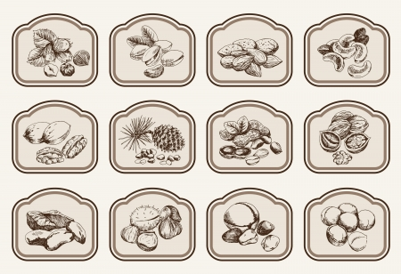 pistachios: hazelnuts  set of vector sketches Illustration