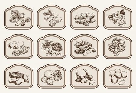 pinoli: nocciole set di disegni vettoriali