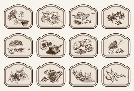 natürliche Gewürze Zusammenstellung von Vektor Skizzen Vektorgrafik