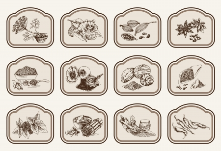 nutmeg: natural spices  compilation of vector sketches