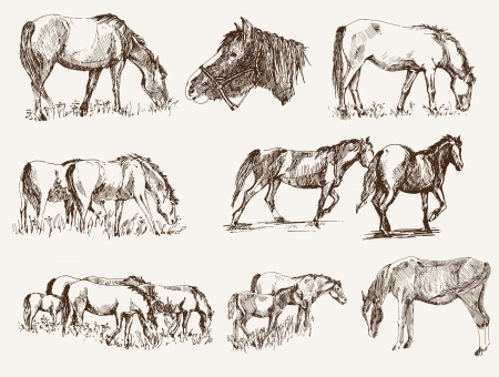 silhouettes of horses. set of vector sketches Illustration