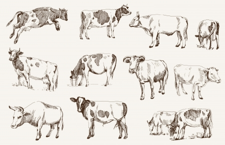 husbandry: cow  animal husbandry  set of vector elements