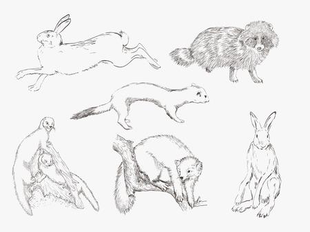 mink: wild animals  compilation of vector sketches