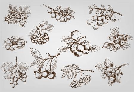 berry set van vector schetsen Stock Illustratie