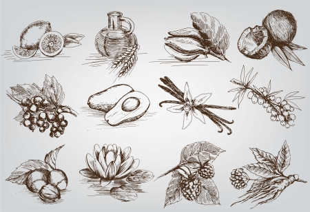 organic background: vector sketches natural ingredients used in pharmacology Illustration