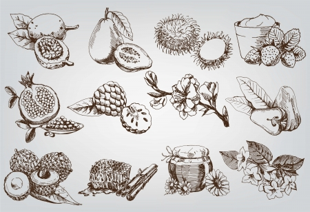 apple and honey: vector sketches natural ingredients used in pharmacology Illustration