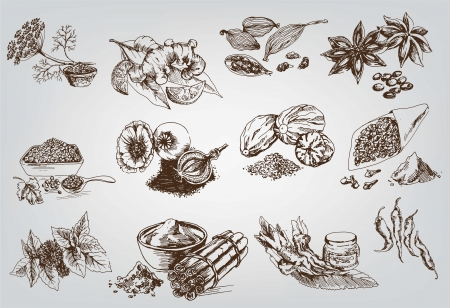 cinnamon: natural spices  compilation of vector sketches