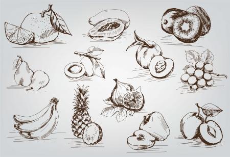 compilatie van vector schetsen van fruit