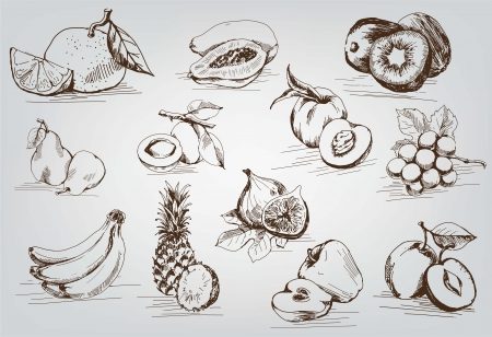 fig: compilation of vector sketches of fruit Illustration