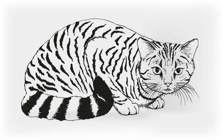 cartoons outline: cat  vector sketch Illustration