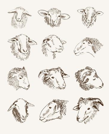 농장 동물의 머리를 설정 벡터 스케치